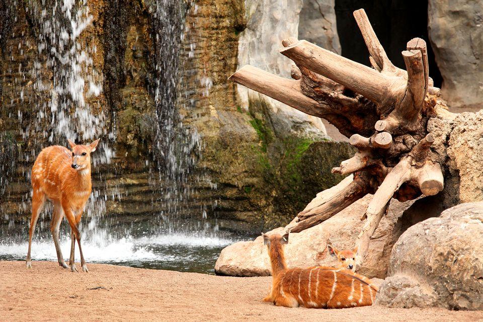 Bambi al Bioparco, Il Bioparco, La fauna e la flora, Comunità valenzana