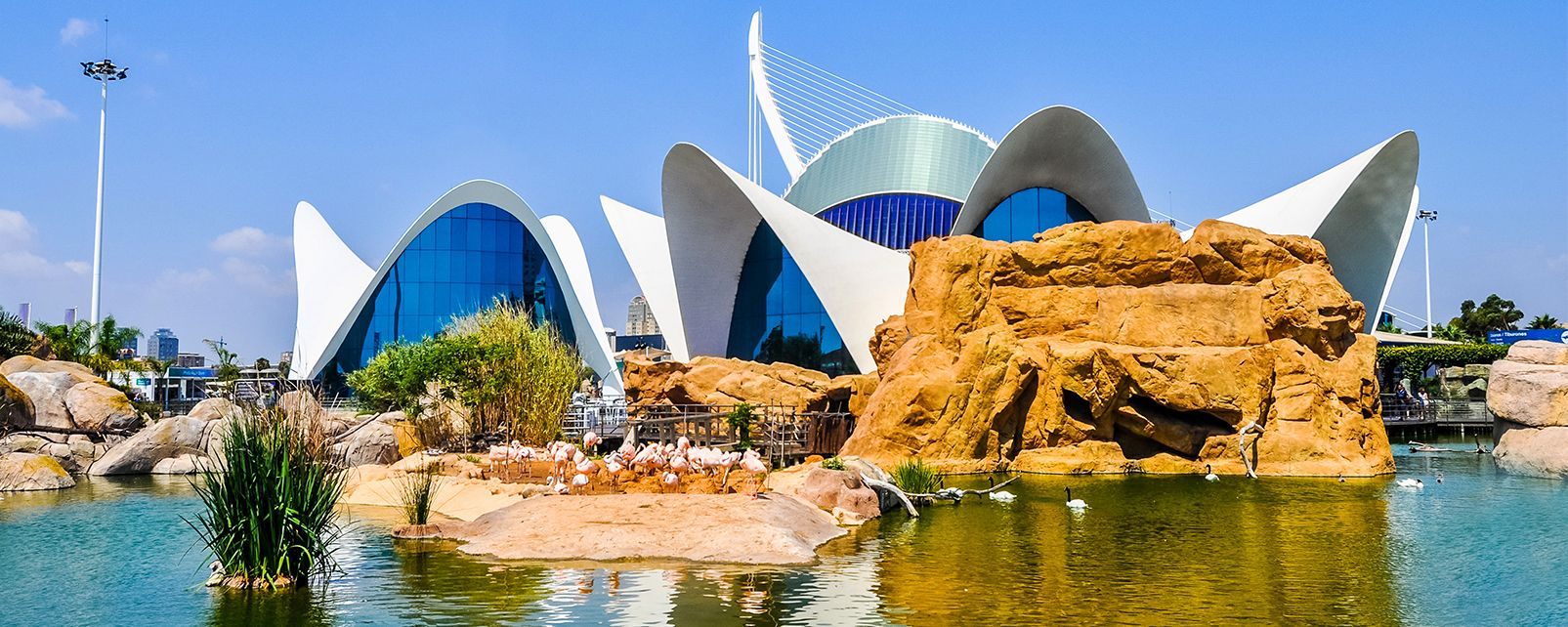 The aquarium, L'Océanographic, The fauna and flora, Community of Valencia