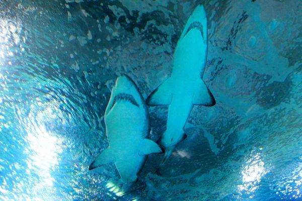 El pasillo de los tiburones, El Oceanogràphic, Fauna y flora, Comunidad Valenciana