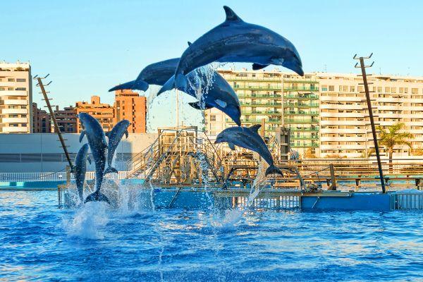 Espectáculo de delfines, El Oceanogràphic, Fauna y flora, Comunidad Valenciana