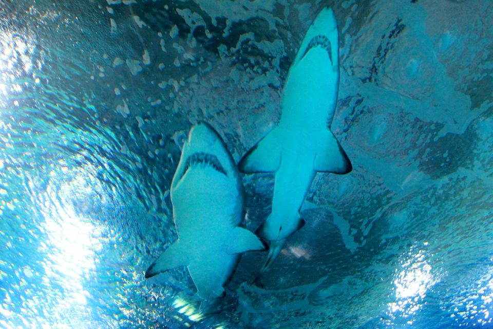 Der Hai-Tunnel, L'Océanographic, Die Fauna und Flora, Gemeinschaft Valencia