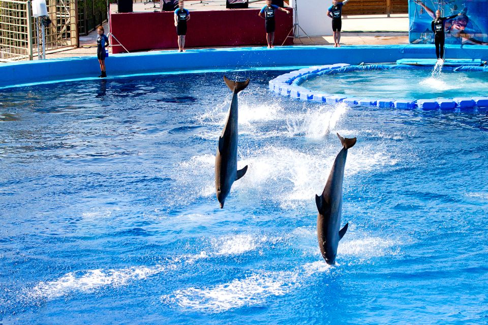 Dolphins, L'Océanographic, The fauna and flora, Community of Valencia