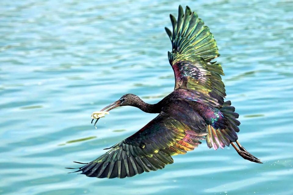 Les Oiseaux - Taiwan