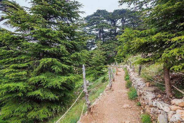 La Vallée Sainte de la Qadisha , Les cèdres de Bécharré , Liban