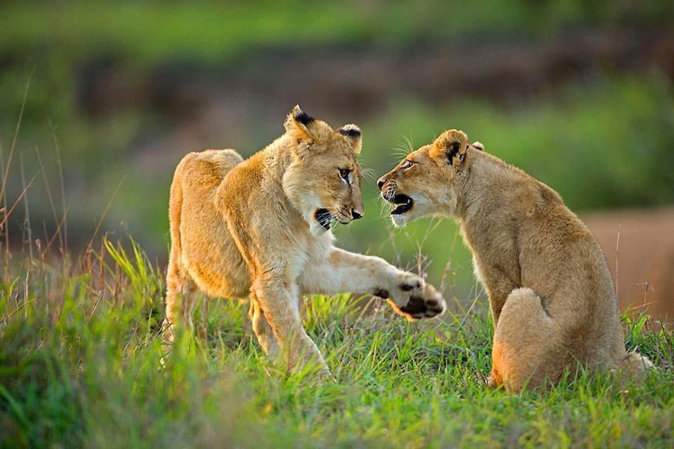Le riserve private , Escursione in una riserva privata africana , Sudafrica