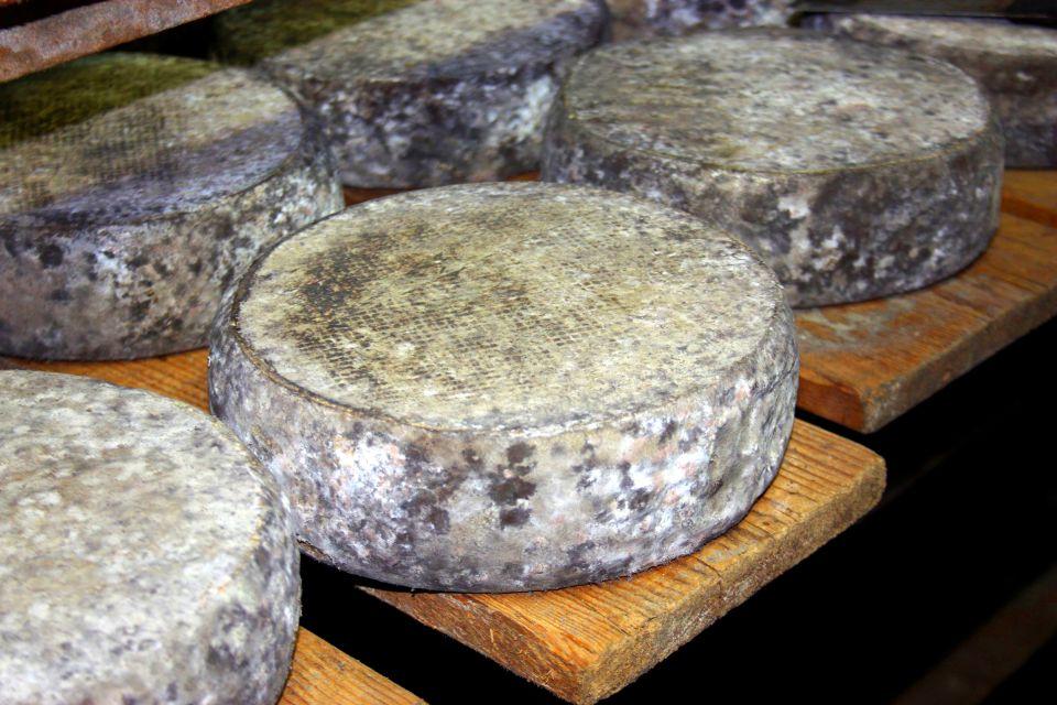 Les Fromages de Savoie , Tomes des Bauges pendant leur affinage , France