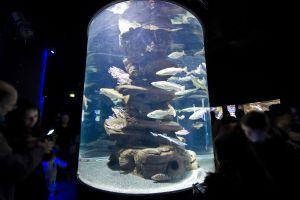 Les activités et les loisirs, aquarium, aquarium de paris, poisson, animal, faune, sous-marine, culture, paris, Ile-de-France, europe
