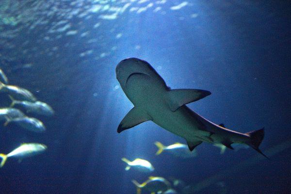 Muchos peces, L'Aquarium de Paris, Las actividades de ocio, París, París-Isla de Francia