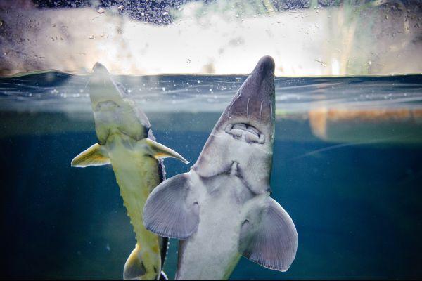 Vista desde el exterior, L'Aquarium de Paris, Las actividades de ocio, París, París-Isla de Francia
