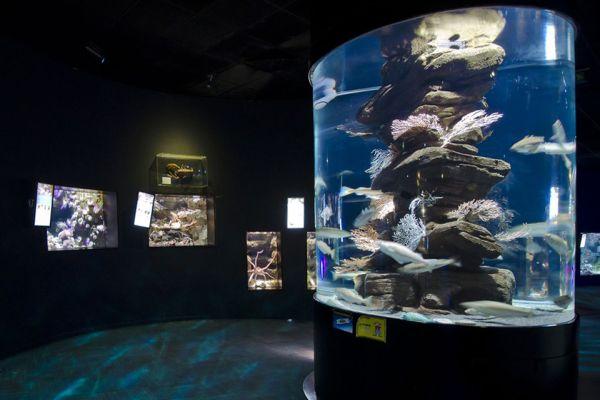 Una visión diferente del acuario, L'Aquarium de Paris, Las actividades de ocio, París, París-Isla de Francia