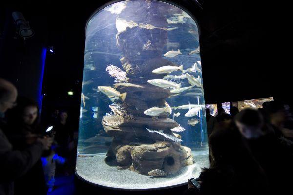El acuario de París, L'Aquarium de Paris, Las actividades de ocio, París, París-Isla de Francia