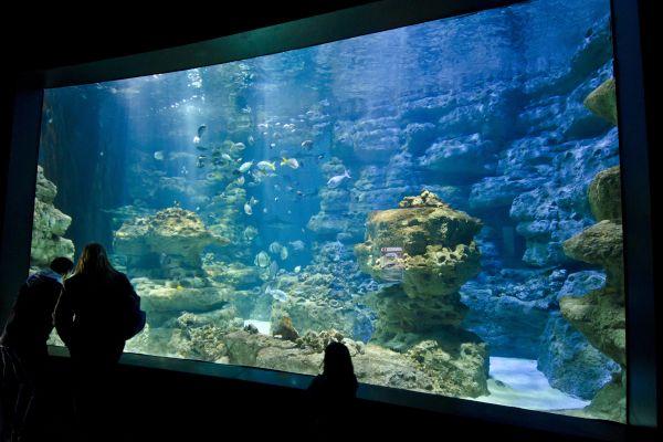 Un escuálido, L'Aquarium de Paris, Las actividades de ocio, París, París-Isla de Francia