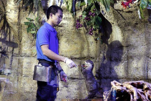 DUBAI- Aquarium , United Arab Emirates