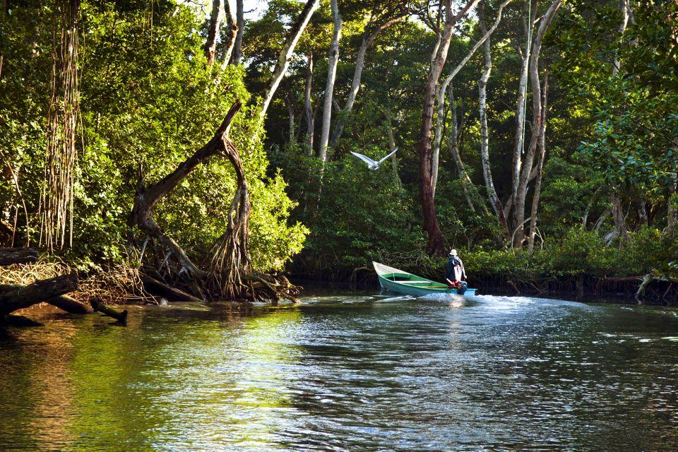 Les paysages, Lagune Gri-Gri République Dominicaine Caraïbes verdure barque mangrove