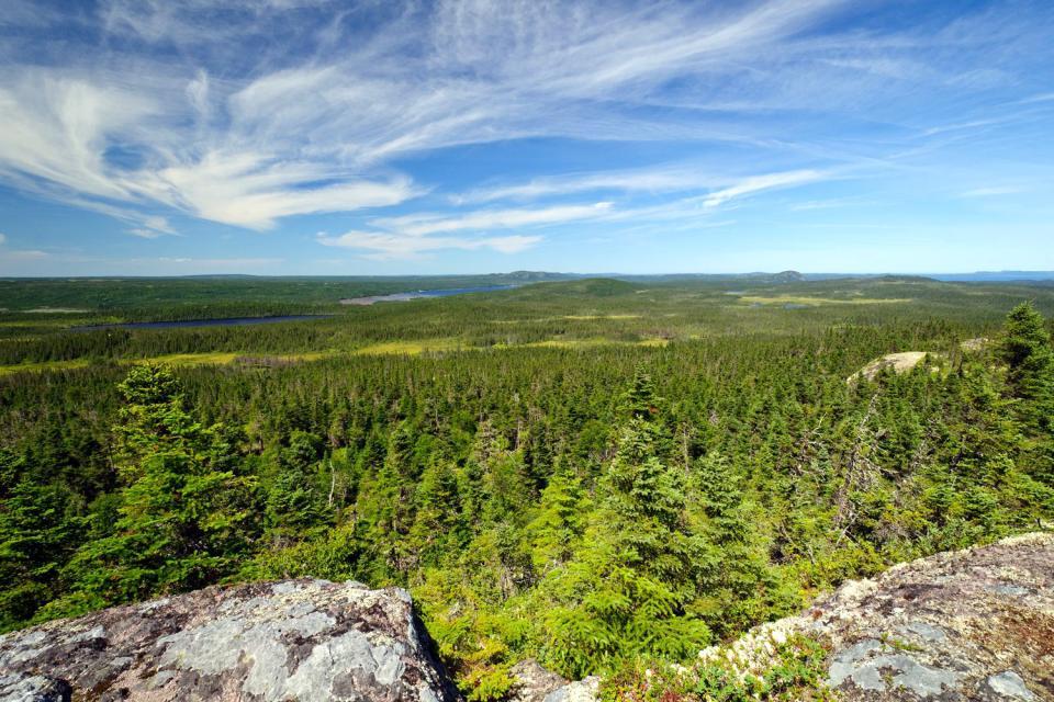 2.Parc National de Terra-Nova , Canada
