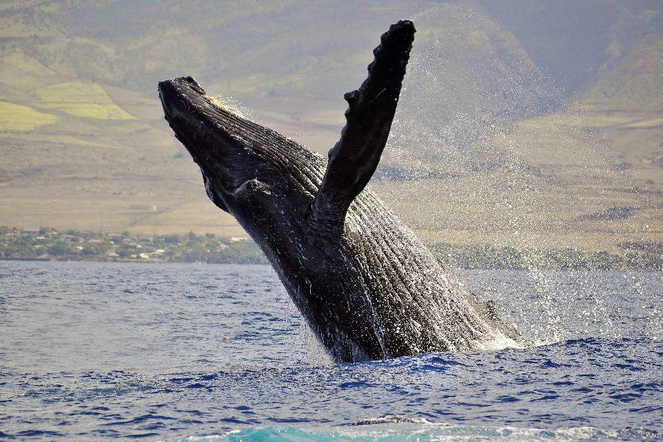 La faune marine , Canada