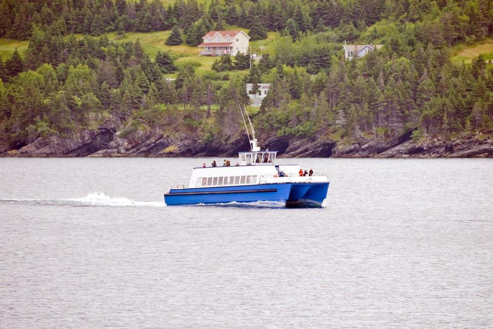 La observación de ballenas , Canadá