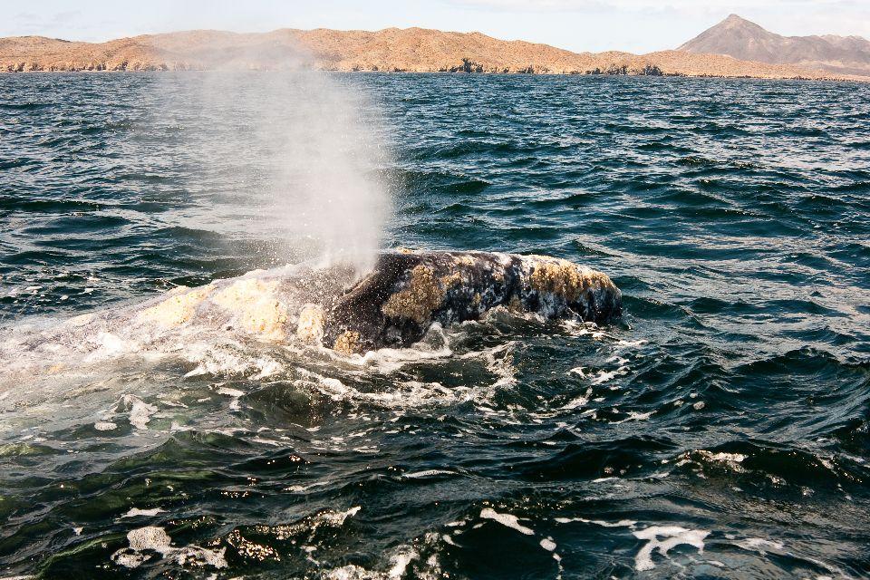 L'observation des baleines , Canada