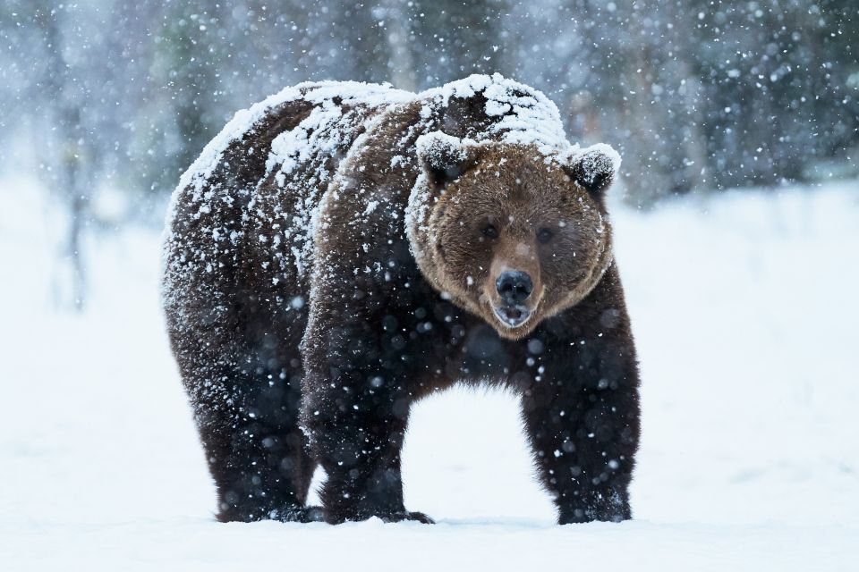 , Brown bears, The fauna and flora, Oural
