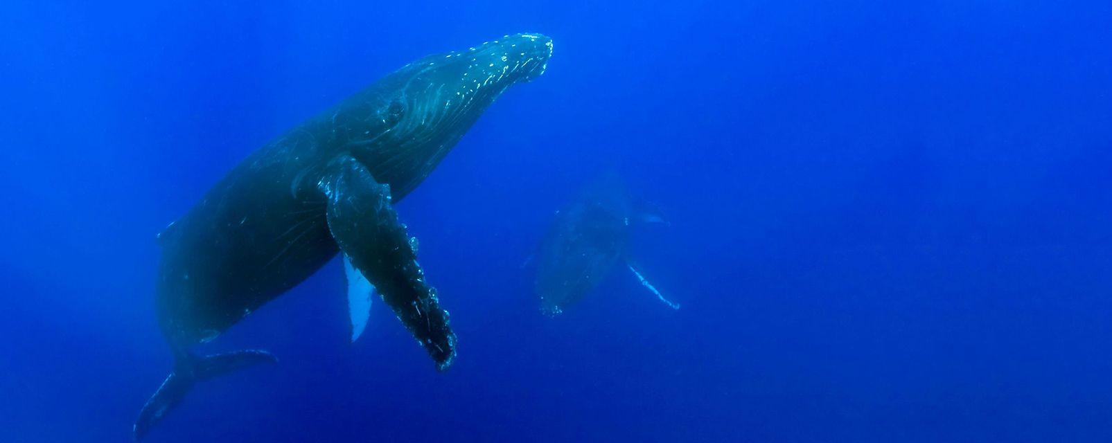 , La fauna, Fauna y flora, Hawaï