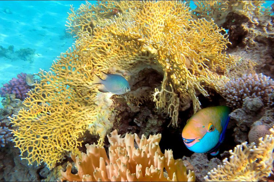 Le poisson-perroquet, La faune d'Hawaï, La faune et la flore, Hawaï