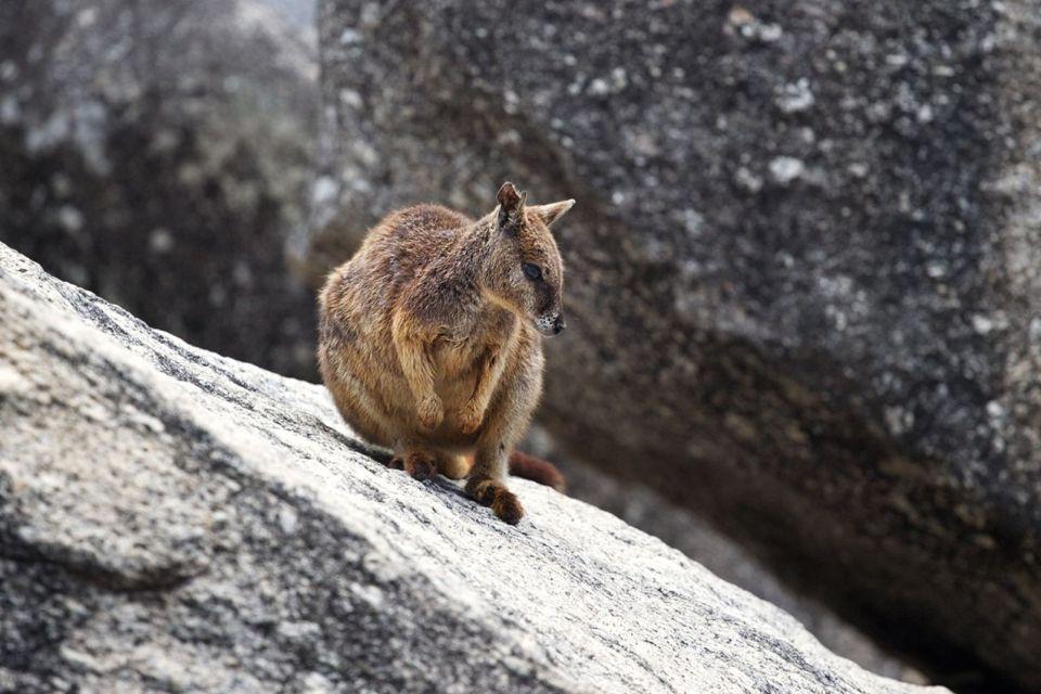 Le wallaby d'Oahu, La faune d'Hawaï, La faune et la flore, Hawaï
