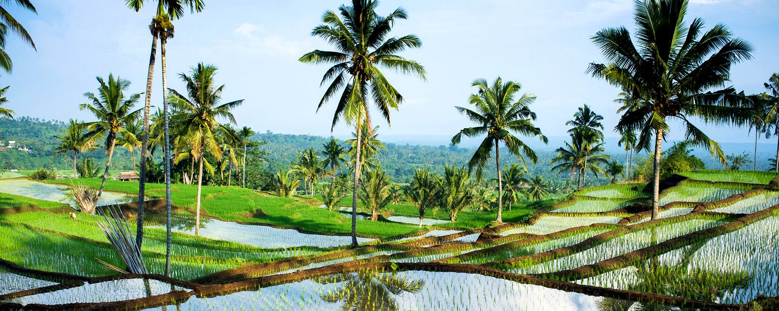 The Tetebatu paddy fields , Indonesia