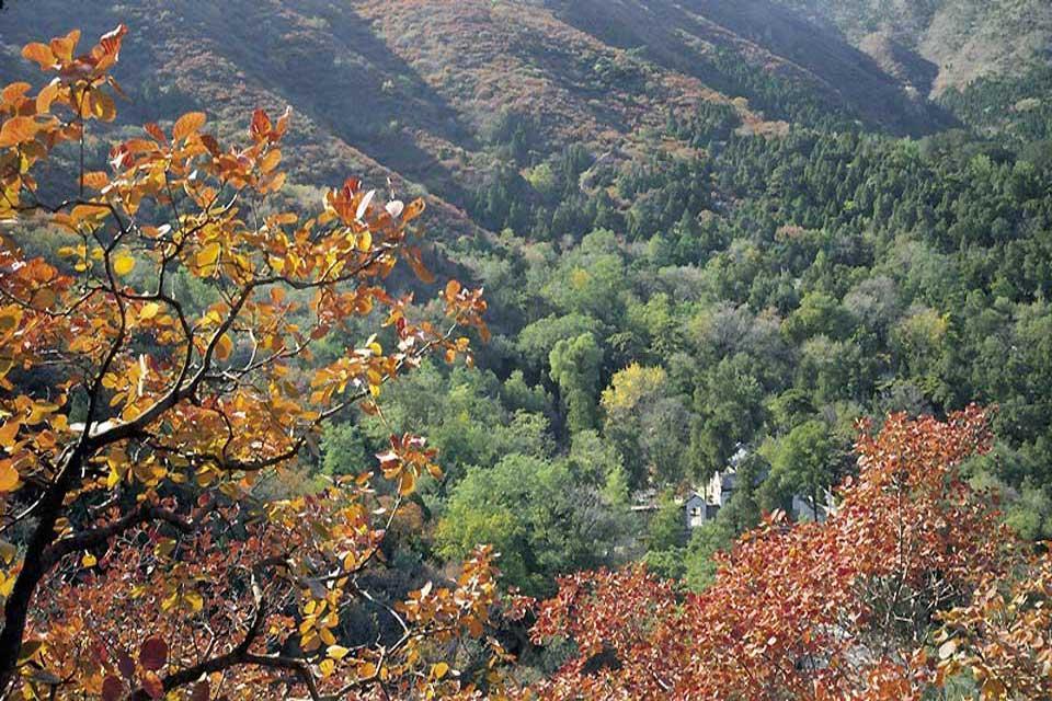 Le Parc des Collines parfumées (Xiangshan) , La végétation du parc des collines parfumées , Chine