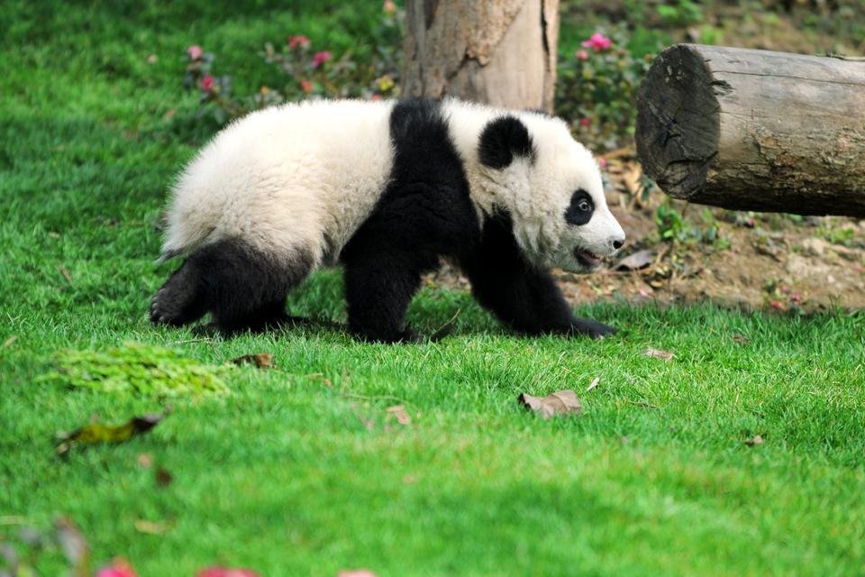 Il parco zoologico (Dongwuyan) , Il parco zoologico di Dongwuyuan , Cina