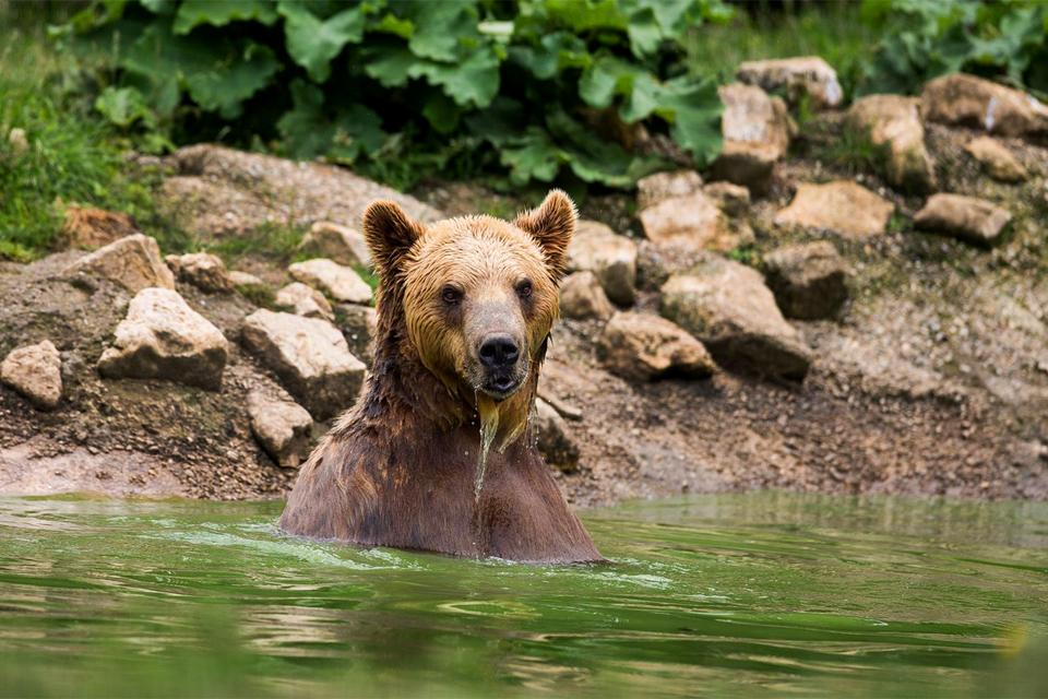 La fauna , Russia