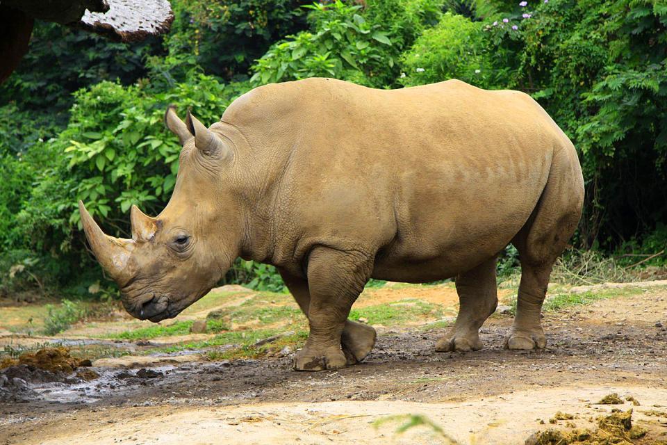 La faune , Indonésie