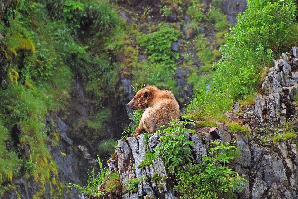 Kodiak Island Alaska Usa