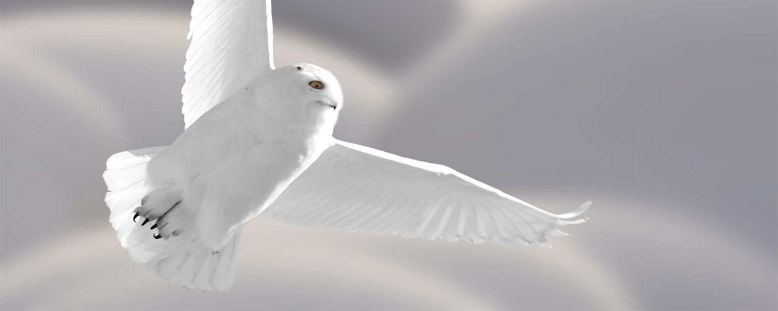 Die Vögel , USA