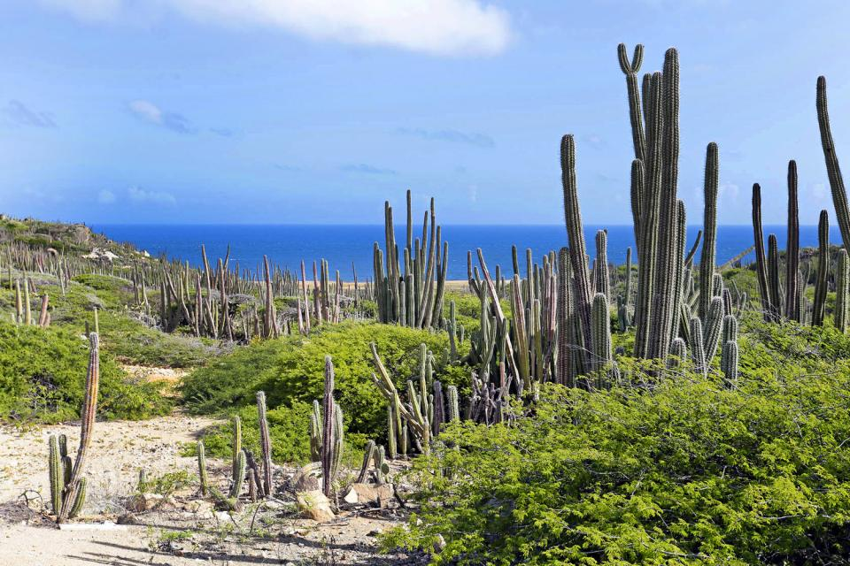 Arikok National Park , Aruba Bonaire Curaçao