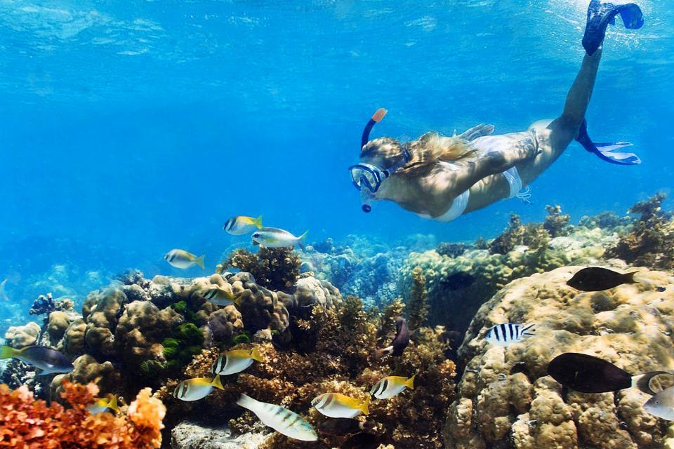 La plongée , Aruba Bonaire Curaçao