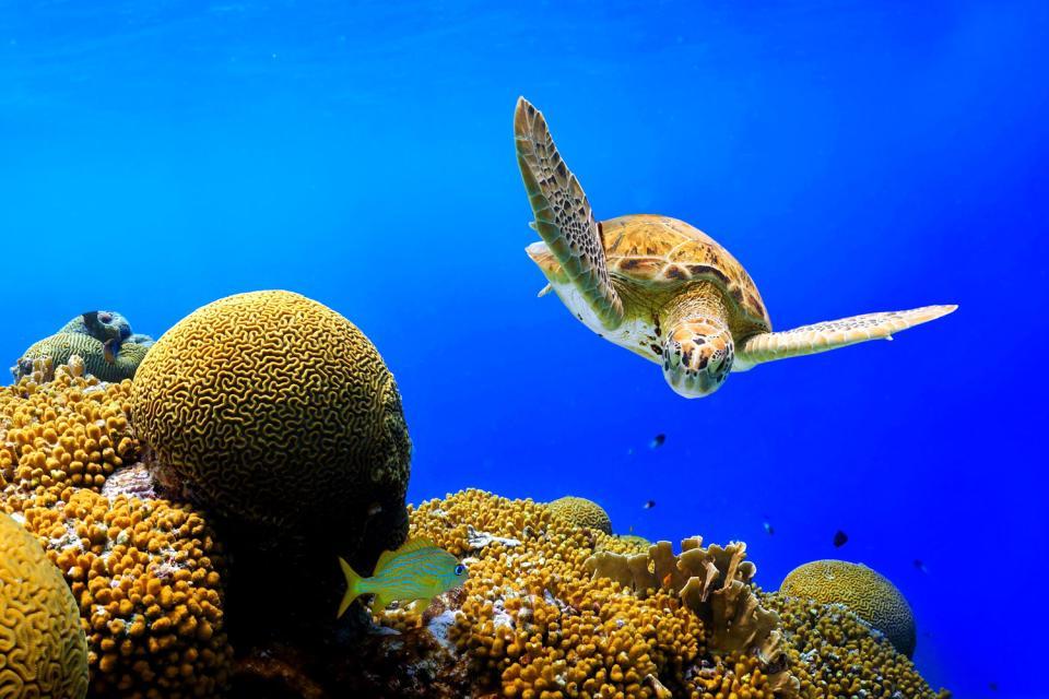 La barrière de corail de Bonaire , Aruba Bonaire Curaçao