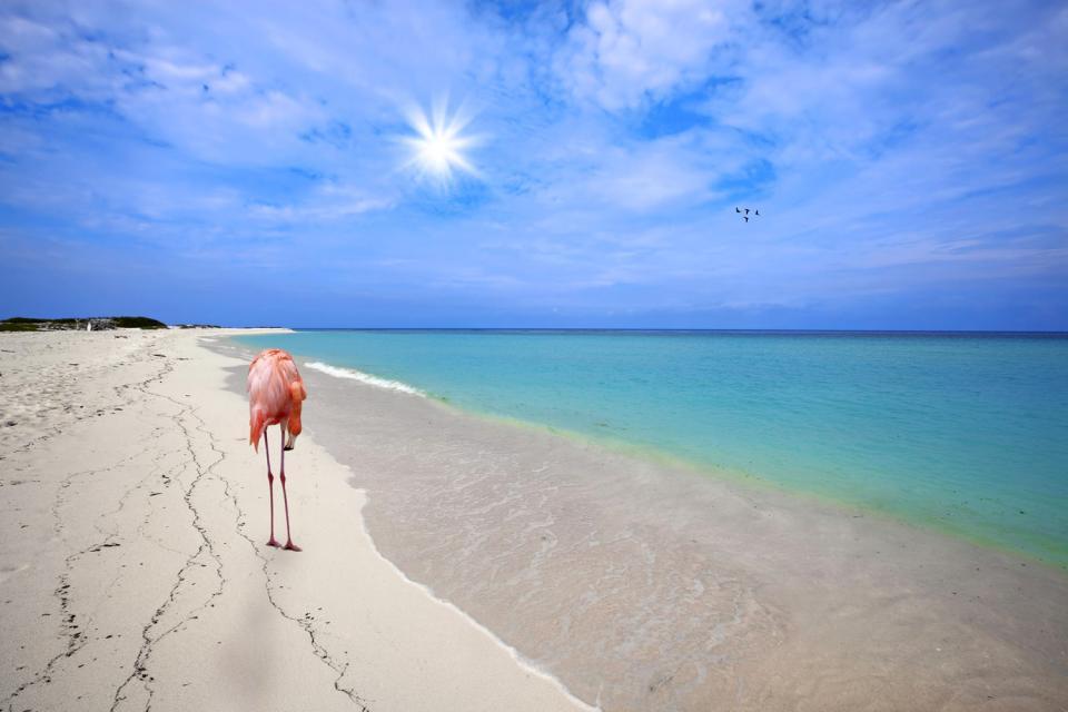 Les plages d'Aruba , Aruba Bonaire Curaçao