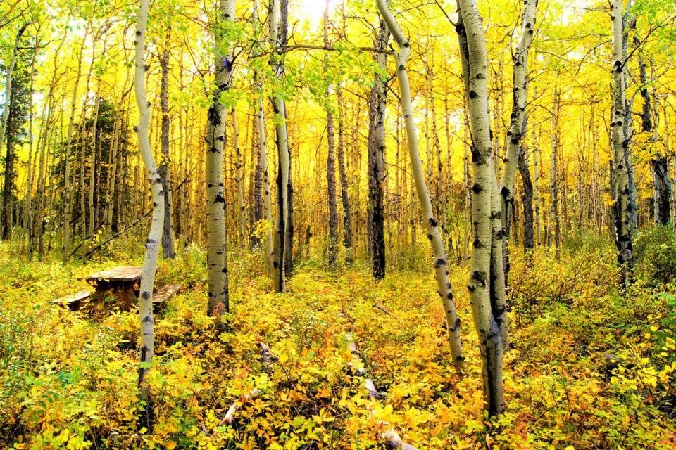 Los bosques , Canadá