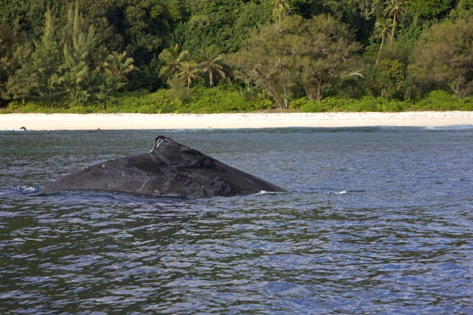 Les baleines à bosse, La fauna e la flora, Le isole australi (Polinesia)