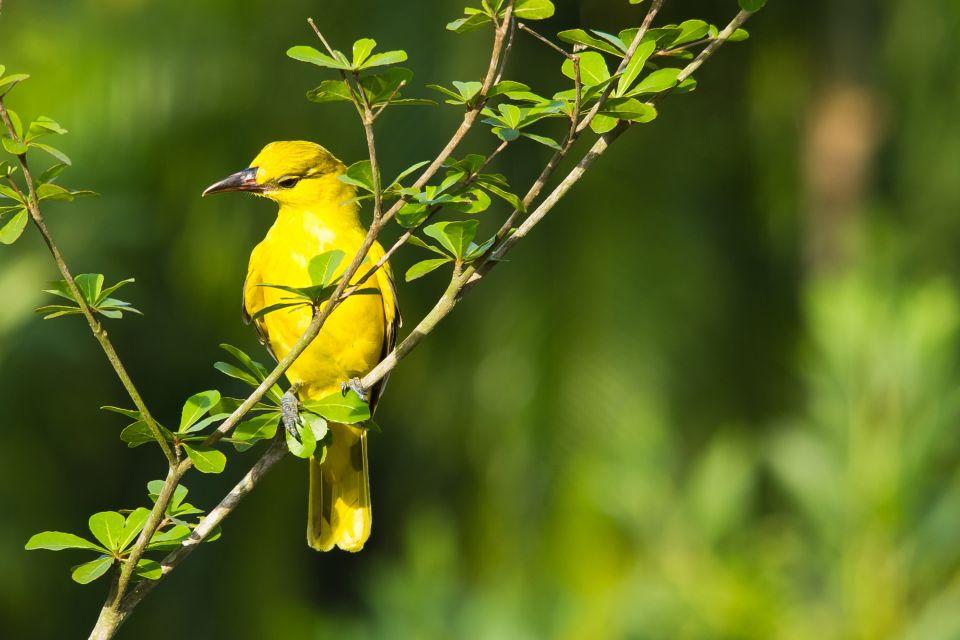 Les oiseaux, La fauna e la flora, Le isole australi (Polinesia)