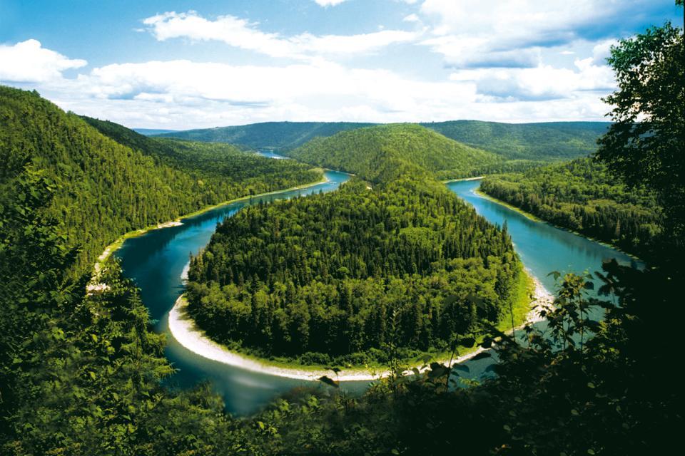 El bosque , Canadá