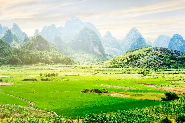Les rizières de Yangshuo , Chine