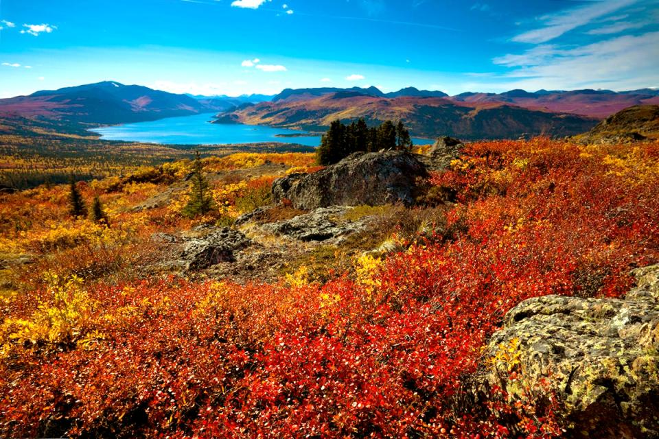 La tundra , Canadá