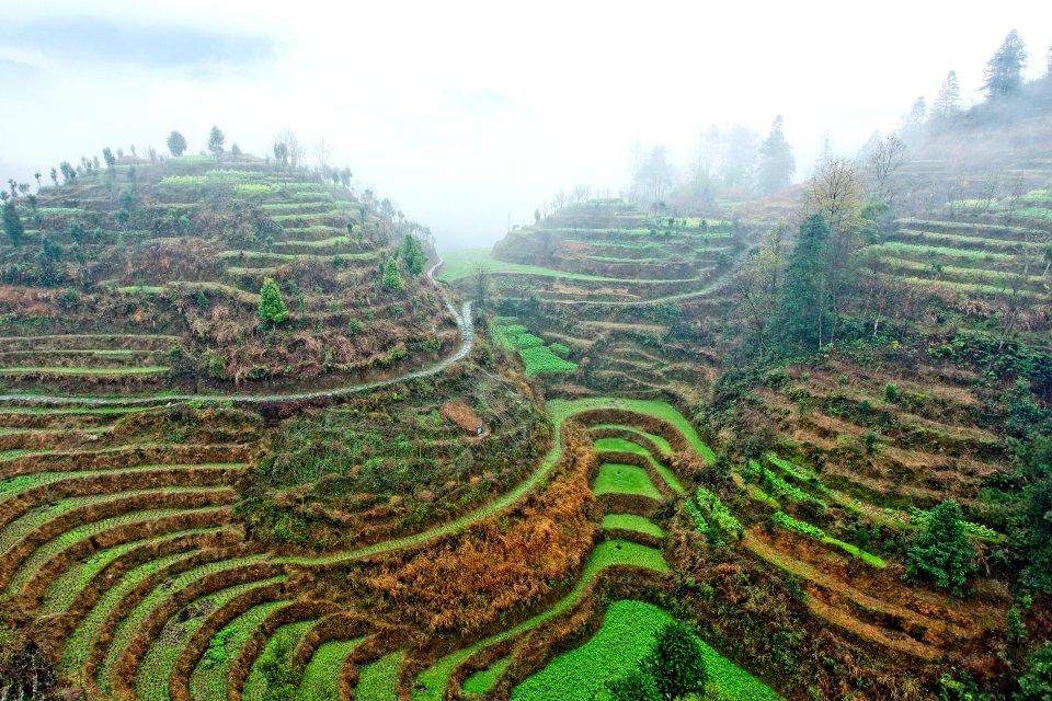 Les cultures en terrasses de Jinkeng , Les rizières en terrasse de Jinkeng , Chine