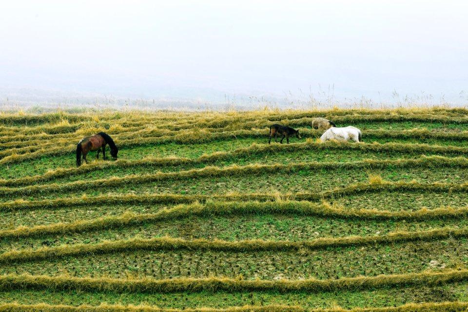 Les cultures en terrasses de Jinkeng , Un petit coin de paradis , Chine