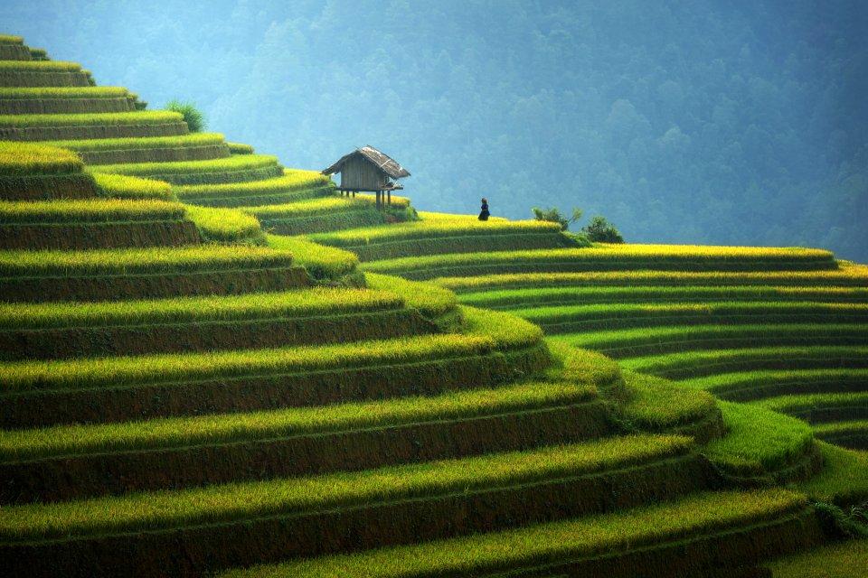 Les cultures en terrasses de Jinkeng , Minorités ethniques du Guangxi et du Guizhou. , Chine