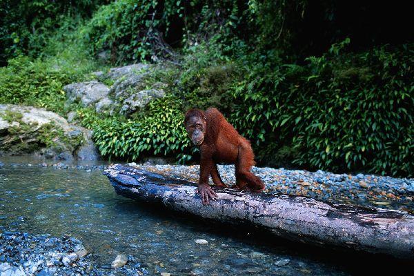 Gunung Leuser , Indonésie