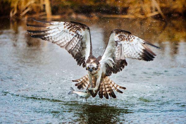 Las aves , Estados Unidos