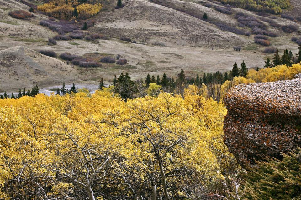 El parque interprovincial de Cypress Hills , Canadá