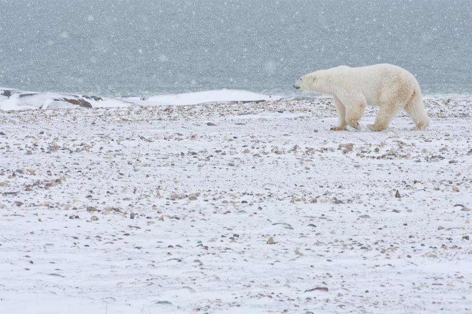 La Cordillère arctique , Canada